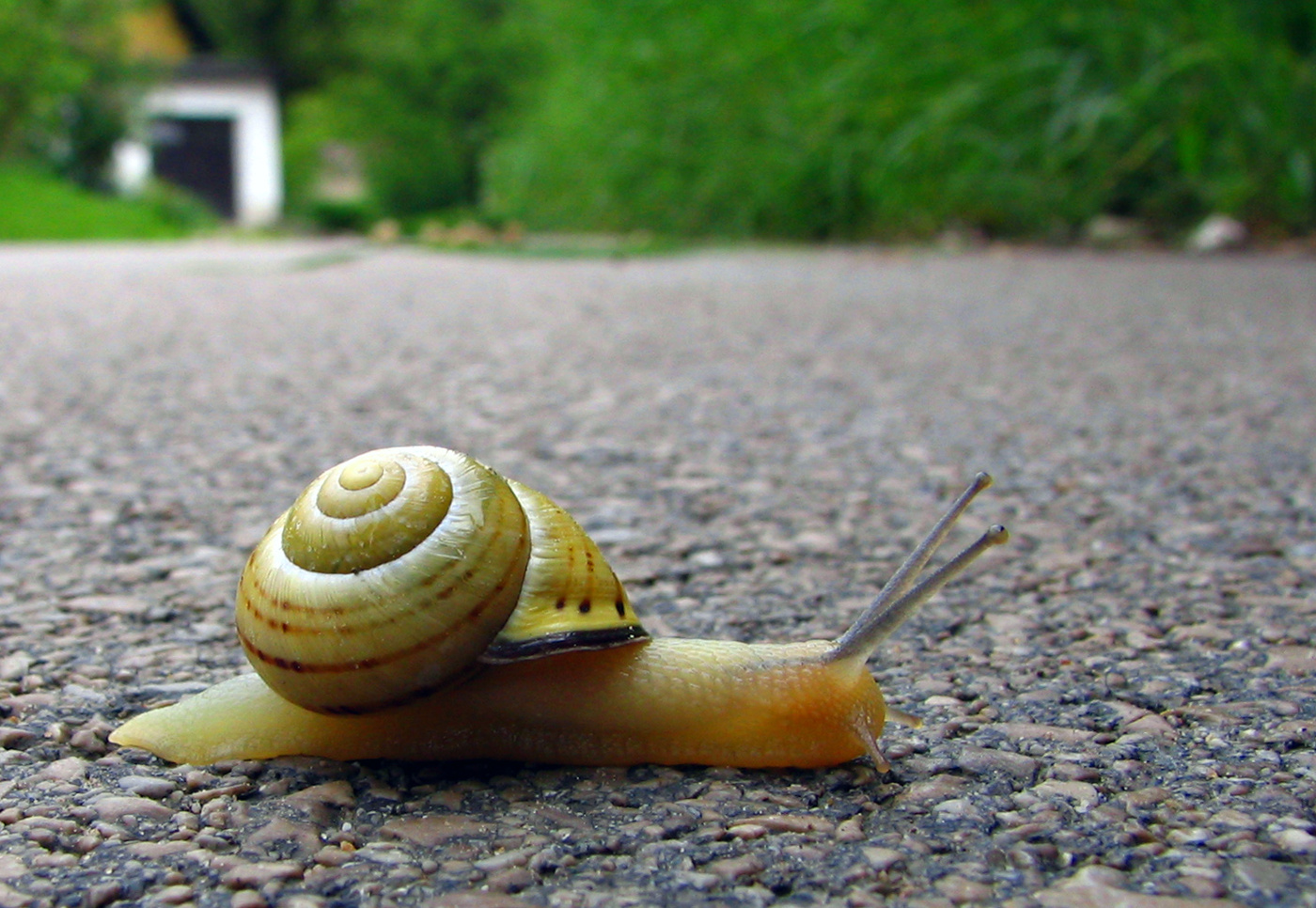 Snails can t live in startup